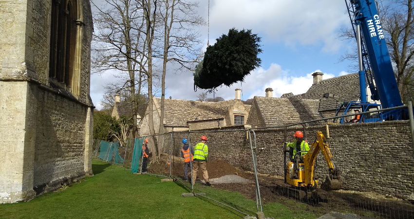 Re positioning a yew tree using a crane