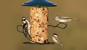 Garden birds feeding on a bird feeder