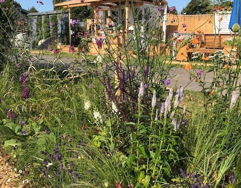 Planting border at the RHS show garden