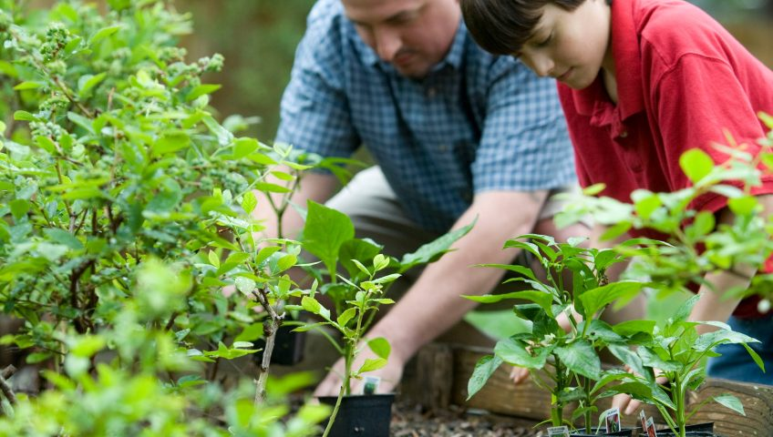 Man and boy enjoying garden, gardens and immune systems