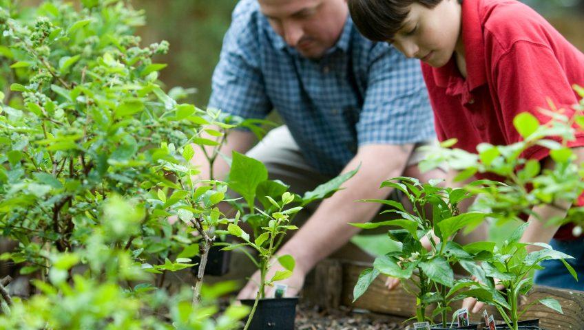 Man and boy enjoying garden, gardens and immune systems